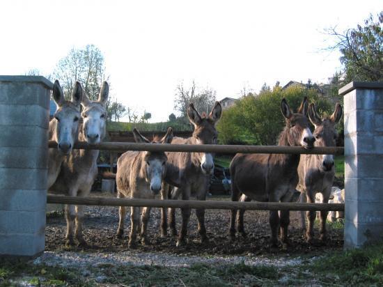 les ânes, la troupe!