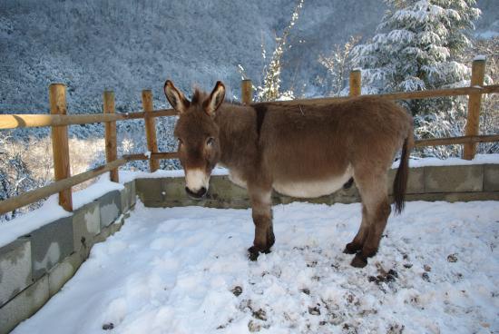 koka dans la neige