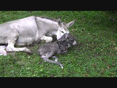 Vaillant nouveau-né