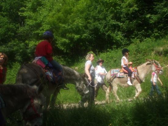 balade avec les ânes